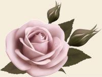 Гадания на розе онлайн